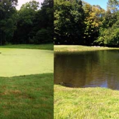 LIFE-Before-After-Aquatic-Weed-Management-NY-.jpg